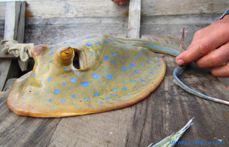 R glementation de la p che en mer for Vivier a poisson