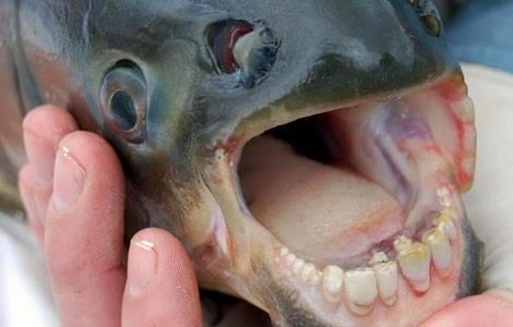 Quelles dents !