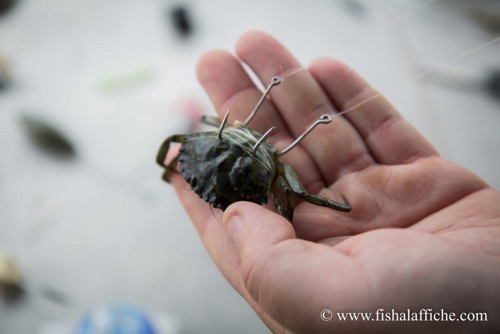 Crabge vert monté en wishbone