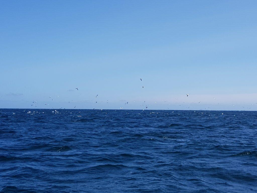 Des centaines d'oiseaux !